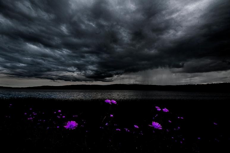 flowers_under_dark_clouds