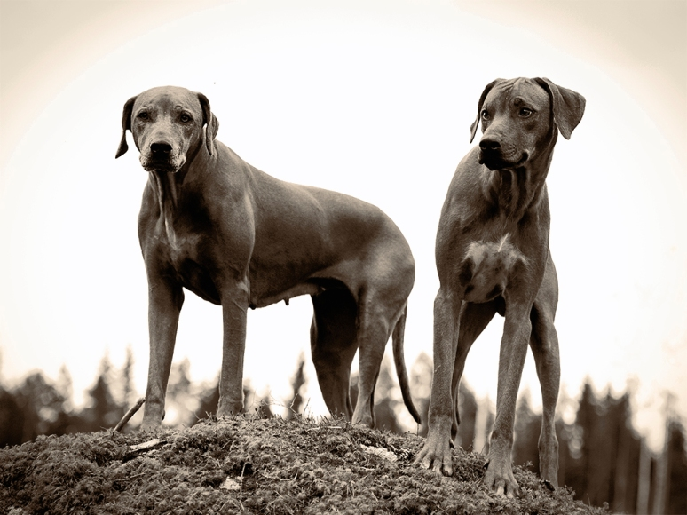 mother_and_son_rhodesian_ridgeback